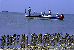 Stock photo of four people fishing from a boat near a shore filled with wading shore birds