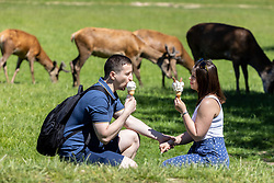 Licensed to London News Pictures. 09/06/2021. London, UK. Walkers, Dan Sirbu 30 and Alexandra Absealeamova 28 from East London, cool off with an ice cream among the deer in the sunshine in Richmond Park, southwest London today. Weather experts have forecast very warm weather for the South East and London this week with temperatures predicted to hit up to 30c at the weekend. Photo credit: Alex Lentati/LNP