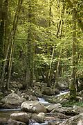 Stream with big rocks in forest, Col de Bavella, Corsica, France