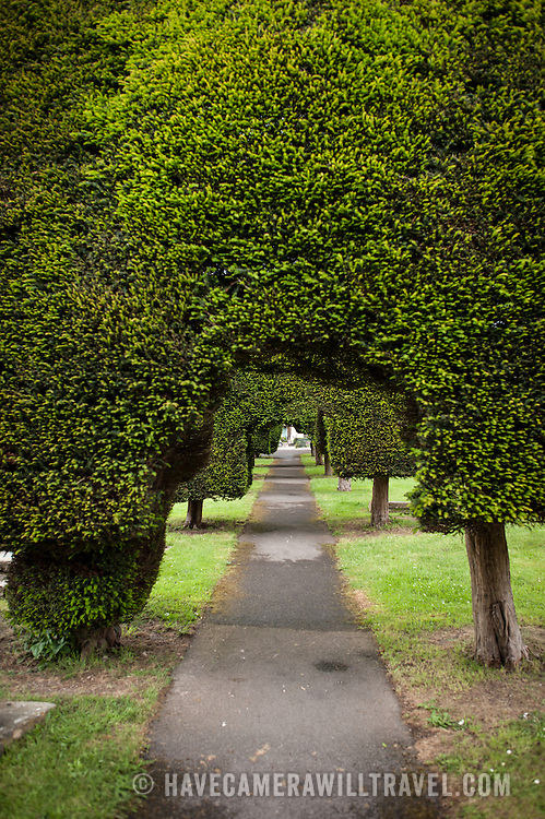 A arched walkway carved through the famous Yew trees at the Parish Church of St Mary in Painswick, Gloucestershire, in England's Cotswolds region.