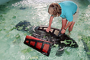 animal care staffer at Sea World of Florida adjusts a special wetsuit on an injured Florida manatee calf, designed to provide floatation and retain body heat