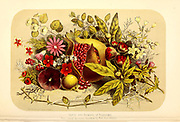 Fruit and flowers of Palestine. chromographic engraving, [chromogenic print, also known as a C-print or C-type print, a silver halide print, or a dye coupler print] from the book 'Palestine, past and present' with Biblical, Literary and Scientific Notices by Rev. Osborn, H. S. (Henry Stafford), 1823-1894 Published in Philadelphia, by J. Challen & son; in 1859