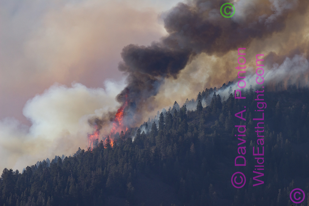 Thompson Fire burning the crown of mixed conifer forest on Redondo Peak June 3, 2013, viewed from the south. Valles Caldera National Preserve, New Mexico, © 2013 David A. Ponton