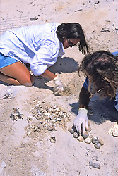 Erin & James Removing Turtle Eggs