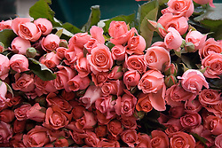 Bunch of pink roses in Naples; Italy,