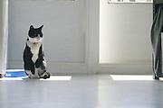 seated cat on gray floor