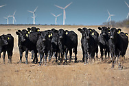 WIndfarm and ranch south of Midland Texas.