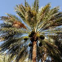 Ras Al Ain Oasis