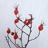 Winter's Cheery Reds