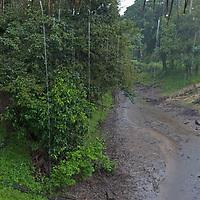 Rain falls on a stream under the Amazon Refuge Wildlife Conservation Center in Peru's Amazon Jungle.