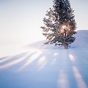 Early morning sun bursts through a lone snow covered tree, high on a mountain ridge line.