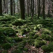 Mossy landscape in Killarney National Park, Ireland