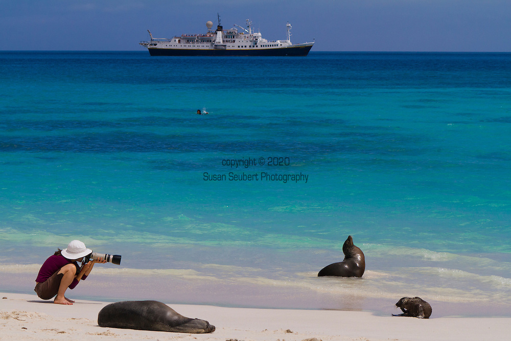 a photographer takes a photograph of a sea lion on a sandy beach on the island of Espanola in the Galapgos National Park, in Ecuador, South America