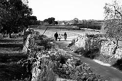 Reportage sul comune di Alessano per il progetto propugliaphoto..Tratturo tipico del luogo..Macurano è un villaggio rupestre considerato un luogo di scambio e commercio, simbolo della cultura dell'olio per la presenza ad oggi di alcune tracce nelle grotte e di frantoi funzionanti nella zona. L'insediamento è caratterizzato da una serie di grotte sia naturali che scavate nel calcare, cisterne per la raccolta dell'acqua, sistemi di canalizzazione che scendono da Montesardo, viottoli, scalette e vie più larghe con antiche tracce di carri..Si ritiene che in questo sito, un vero e proprio centro abitato ben organizzato distante circa quattro km dalla costa, i monaci basiliani scappati dall'oriente in seguito alla lotta iconoclasta, trovarono rifugio e si dedicarono all'agricoltura..L'area del villaggio rupestre fu sicuramente sfruttata in epoche successive, lo prova l'esistenza di ben tre masserie di cui una fortificata e i resti di una serie di costruzioni che fanno parte dei numerosi esempi di architettura rurale presenti in questo territorio. .Il complesso masserizio, denominato Macurano, edificato probabilmente nel Cinquecento include la Masseria di Santa Lucia e la cappella di Santo Stefano. La Masseria è dominata dal nucleo originario, ovvero dalla torre cinquecentesca coronata da beccatelli a sostegno del parapetto aggettante del terrazzo sommitale.