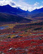 Reds of alpine bearberry and yellows of willow coloring the North Klondike River Valley leading toward Mount Monolith and Tombstone Mountain, Tombstone Territorial Park, Yukon, Canada.