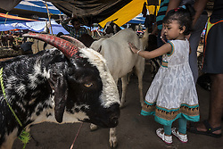 KOLKATA, Sept. 12, 2016 (Xinhua) -- An Indian child plays with goats at a local goat market for the Eid al-Adha festival in Kolkata, capital of eastern Indian state West Bengal, Sept. 12, 2016. Eid al-Adha, the Festival of Sacrifice, is celebrated by Muslims around the world by slaughtering camels, goats, sheep and cattle in commemoration of the prophet Abraham's readiness to sacrifice his son to show obedience to God. (Xinhua/Tumpa Mondal).****Authorized by ytfs* (Credit Image: © Tumpa Mondal/Xinhua via ZUMA Wire)