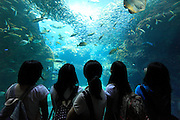 school girls looking at various type of fish in large aquarium