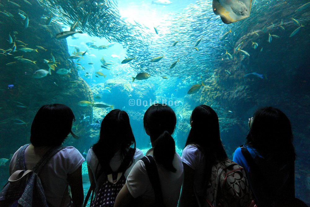 school girls looking at various type of fish in large aquarium