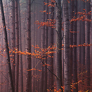 Outstanding Misty autumn forestmisty forest at autumn
