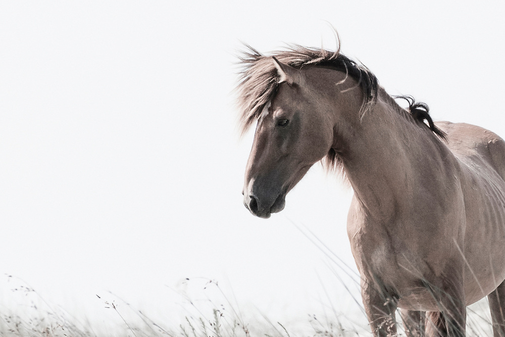"""""""Courage is grace under pressure"""" ~ Ernest Hemingway<br /> <br /> Tracie Spence's fine art photography series of The Spanish Wild Mustangs."""