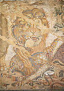 Roman mosaic of a Lion from Pompeii,  Naples Archaeological Musum, Italy ..<br /> <br /> If you prefer to buy from our ALAMY PHOTO LIBRARY  Collection visit : https://www.alamy.com/portfolio/paul-williams-funkystock/roman-mosaic.html - Type -   Naples    - into the LOWER SEARCH WITHIN GALLERY box. Refine search by adding background colour, place, museum etc<br /> <br /> Visit our ROMAN MOSAIC PHOTO COLLECTIONS for more photos to download  as wall art prints https://funkystock.photoshelter.com/gallery-collection/Roman-Mosaics-Art-Pictures-Images/C0000LcfNel7FpLI