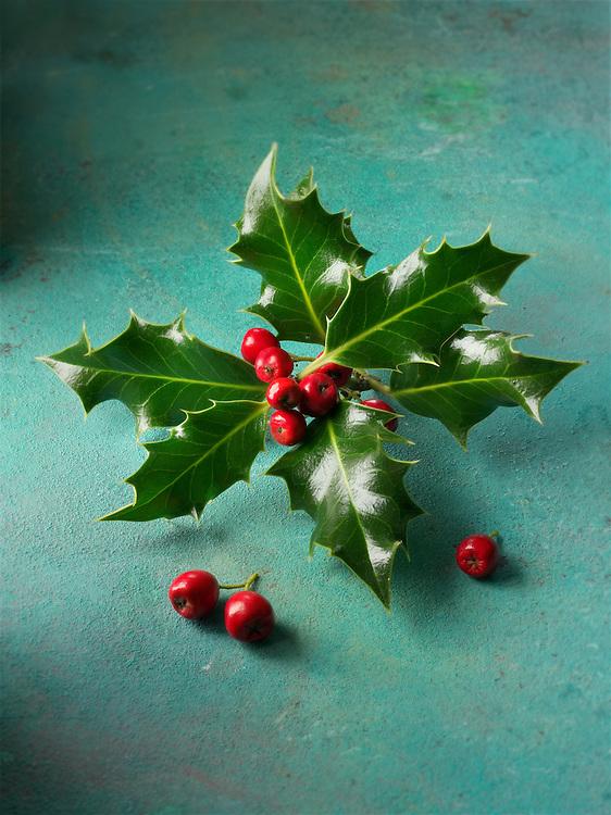 Holly leaves with red berries - Ilex aquifolium