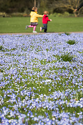 © Licensed to London News Pictures. 21/03/2017. London, UK. Toddlers run past a carpet of glory-of-the-snow flowers at the Royal Botanic Gardens Kew in afternoon sunshine.  Photo credit: Peter Macdiarmid/LNP