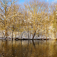 """""""Winter in Gold"""" <br /> <br /> What a gorgeous winter afternoon with a river of gold!"""