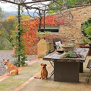 Autumn Garden 679