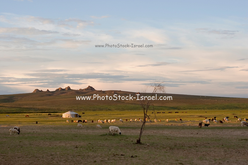 Mongolian country side Gers, sheep and sky