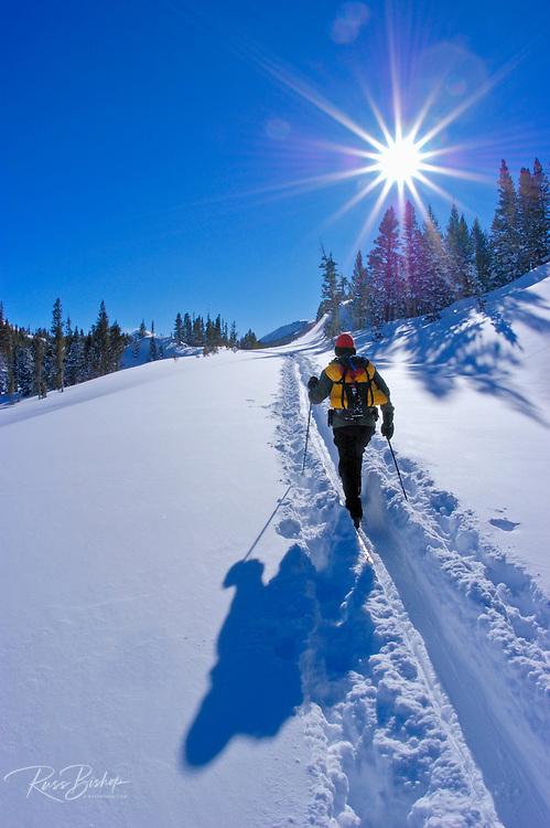 Backcountry skier below Tioga Pass, Inyo National Forest, Sierra Nevada Mountains, California USA