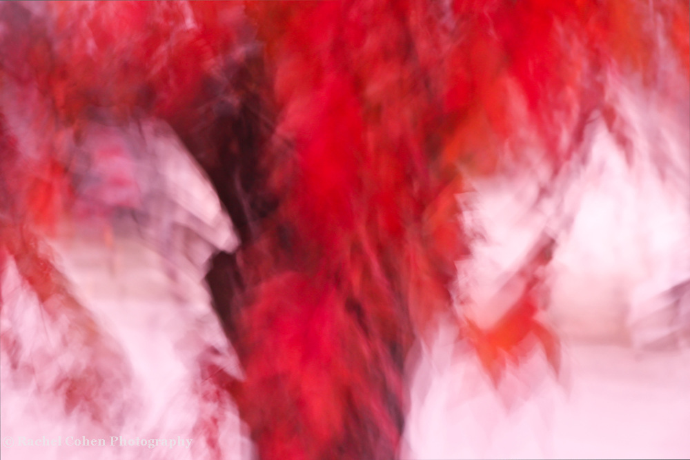 """""""On fire"""" 2<br /> <br /> A blazing abstract image in colors from a fiery orange-red all the way through to white!!<br /> <br /> Nature Abstracts by Rachel Cohen"""