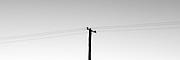 Power pole, Morpeth, Hunter Valley, Australia