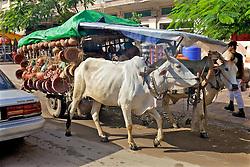 Steers Pulling Cart In City