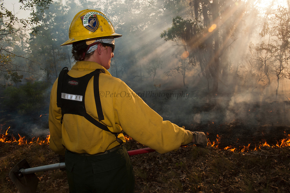 Prescribed Burn in longleaf pine forest.<br /> Amy Clifton<br /> The Orianne Indigo Snake Preserve<br /> Telfair County, Georgia<br /> USA