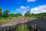 Ferns emerging from lava flow covering the remains of Highway 130 in Kalapana, The Big Island, Hawaii