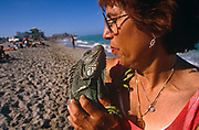 A lady and her pet green iguana Iguanas stop walking along the surf in Miami Beach's coast for a moment to stand on the sand and kiss on the lips. Away from its proper habitat, this reptile looks comfortable in the hands of its affectionate mothering owner and in this warm climate. These exotic  lizards' live in tropical rainforests, in lower altitudes near water sources, such as rivers or streams. They spend most of their time high in the forest canopy, about 40-50 feet above the ground. Iguanas are diurnal, awake during the day. They are also cold-blooded, so they do not produce their own body heat, so need warm temperatures to thrive. Many people in the United States and elsewhere want a green iguana for a pet, so there is a big demand for their capture.