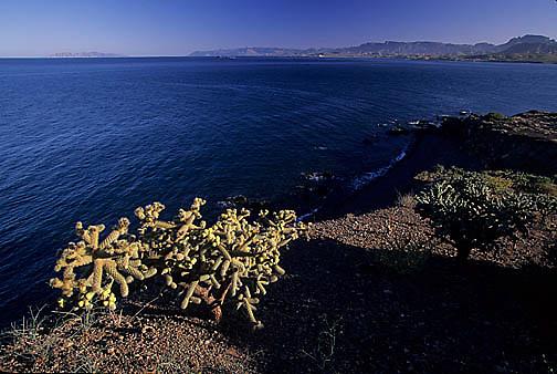 Mexico, Scenic of estuary near Tibivichi. Baja, Mexico.