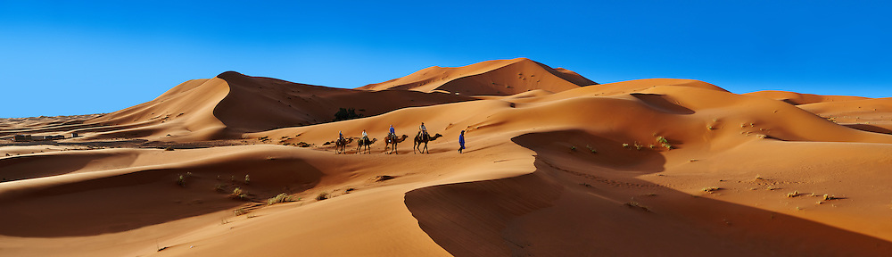 Camel rides on the Sahara sand dunes of erg Chebbi, Morocco, Africa .<br /> <br /> Visit our MOROCCO HISTORIC PLAXES PHOTO COLLECTIONS for more   photos  to download or buy as prints https://funkystock.photoshelter.com/gallery-collection/Morocco-Pictures-Photos-and-Images/C0000ds6t1_cvhPo