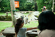 A young girl catching a cockatoo