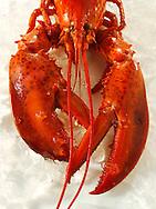 Fresh whole lobster