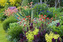 Border in John Massey's garden including Geum 'Mrs Bradshaw', Aquilegia 'Crimson Star', Yucca gloriosa, cornflowers and atriplex