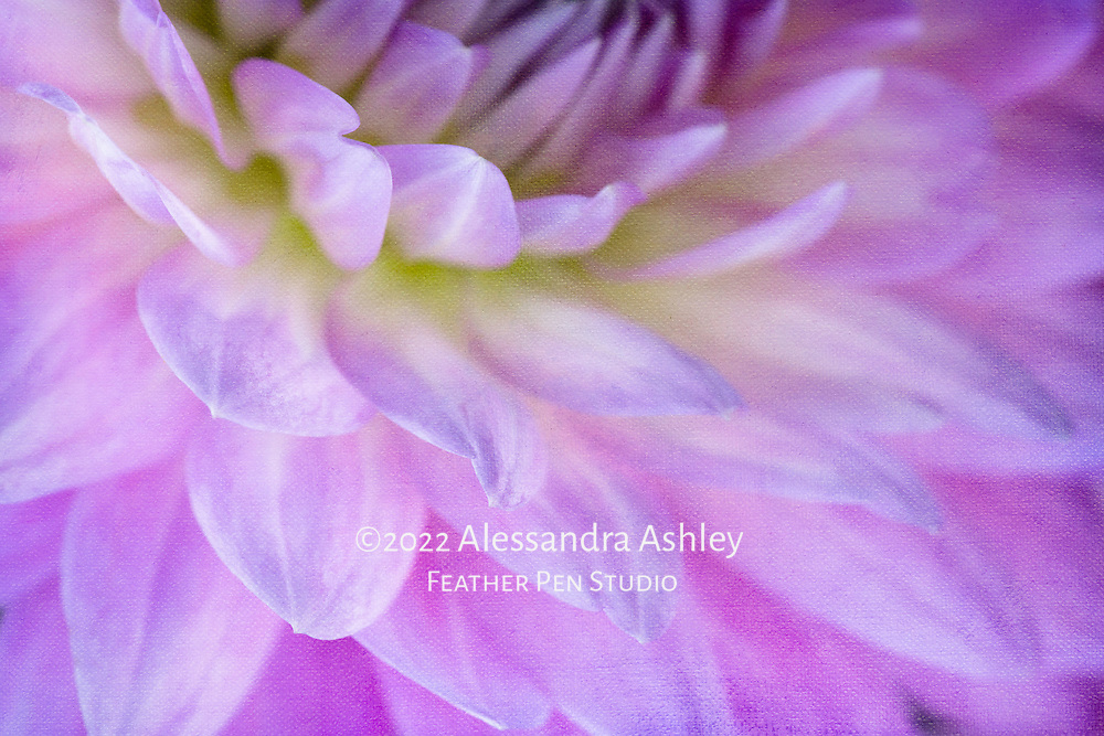 Macro view, waterlily type dahlia petals, blended with paper texture.