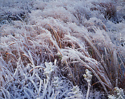 Ice-coated paririe grasslands, Osage Questas physiographic province near Allen, Kansas.