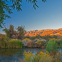 Black Willow trees and blooming Rabbitbrush grow beside the Owens River near Bishop in the Owens Valley, California. This is a major water supply for the City of Los Angeles, which acquired most of the valley in an infamous land grab at the turn of the twentieth century.