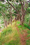 Hiker on the lush Po'omau Canyon Ditch Trail, Kokee State Park, Island of Kauai, Hawaii