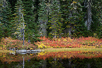 autumn huckleberry colors the shoreline along a pond in a Subalpine Fir forest in the Indian Heaven Wilderness - Gifford Pinchot National Forest, Washington state, USA