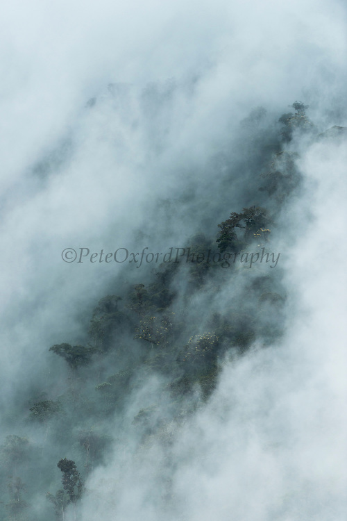 Cloud Forest Canopy & cloud cover<br /> Papallacta<br /> 3,300 m in the Andes just off the Eastern Cordilleras<br /> One of the wettest places in Ecuador<br /> ECUADOR.  South America