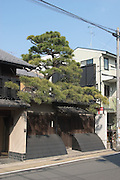 Town house with Japanese black pine tree which also may act as a barrier to prevent people climbing over the outer wall. The curved structure is an inuyarai (a lightweight removable bamboo screen) to prevent rain splashes from the ground hitting the wall and causing the timber to rot. Kyoto, Japan, 2004