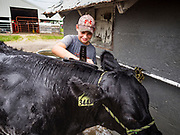 26 JUNE 2019 - CENTRAL CITY, IOWA: CALEB KEEGAN, 11, washes a beef cattle at the Linn County Fair. Summer is county fair season in Iowa. Most of Iowa's 99 counties host their county fairs before the Iowa State Fair, August 8-18 this year. The Linn County Fair runs June 26 - 30. The first county fair in Linn County was in 1855. The fair provides opportunities for 4-H members, FFA members and the youth of Linn County to showcase their accomplishments and talents and provide activities, entertainment and learning opportunities to the diverse citizens of Linn County and guests.       <br /> PHOTO BY JACK KURTZ